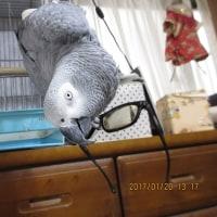 メガネ外しの金太郎