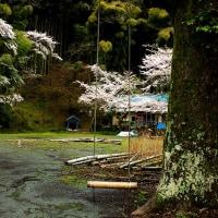 2017 廃校に毎年訪れる桜の季節 (旧若宮南小学校)《福岡県宮若市》