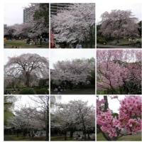 2008-03-30千葉みなと公園