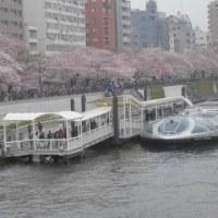 桜と隅田川