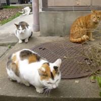 6匹の猫ちゃん達
