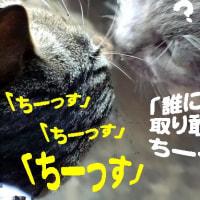 イカ玉丼弁当/奇跡の1枚