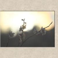 写力の気楽なカメラアングル 『続梅シリーズ=陽光』