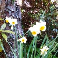 2月18日の花
