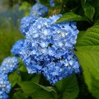 梅雨に咲く花。