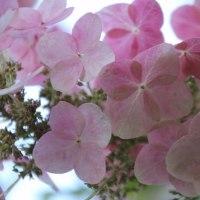 相模原市北公園の紫陽花とその他の花