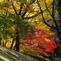 小さくとも大平公園の紅葉には見惚れちゃう