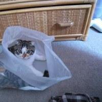 猫は意外とかわいいなぁ~