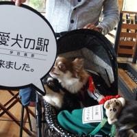 小田原城で叫ぶ(笑)