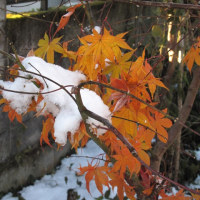 11月に雪が降りました。