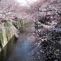 桜 2017.4
