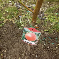 果物の植樹