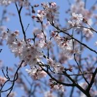 弥生3月 春はすぐそこに
