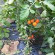 花壇の中の野菜たち