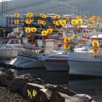 アイスランドの沿岸漁師はサバの4%割り当てに不満を持つ