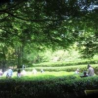 森の中で茶摘み