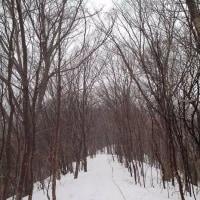 雪雨霙 三角山