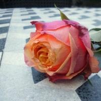 美しい五月  薔薇の香りをあなたへ。