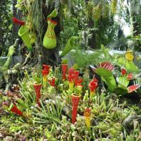 食虫植物のディスプレイ
