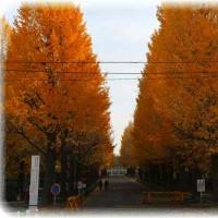 東急日吉駅正面が黄色く染まってる