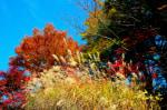 高尾山/ 紅葉真っ盛り。 だけどこの人込みは・・・?        2016-11-18