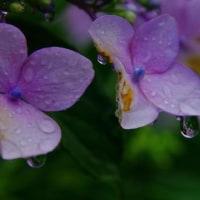 梅雨の光景