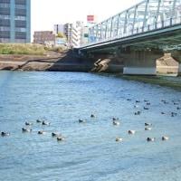 江戸川道場