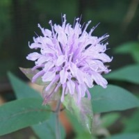 6月の庭の花