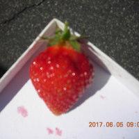 最後のイチゴ
