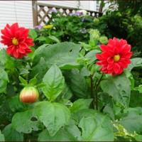 外花壇のイメージを変える