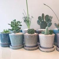 ダルトンの植木鉢