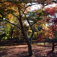 深大寺&神代植物公園