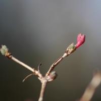 春が待ち遠しい浅間山公園