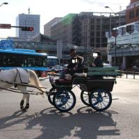 白馬の馬車発見@横浜