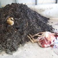 有害鳥獣駆除について