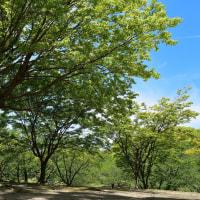 先週日曜日の春日公園から新緑と青空2/2(D5500,18-140mm)