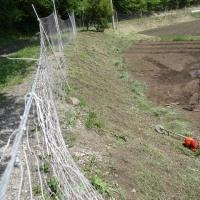 初夏の陽射しを受けて、草刈に汗を流す
