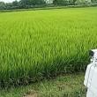 農作業など雑用の一日