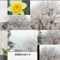 【風景写真動画012】[2013年3月29日〜3月30日]【う山TV】