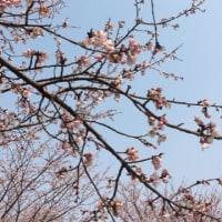 DEFY3  3/19  今年初のクロトレ