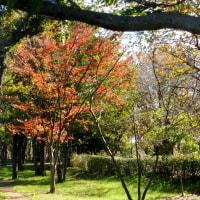 東京都東村山中央公園の2016年初冬・・木枯らし一番