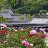 5月1日 牡丹の時期の長谷寺