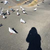 海の鳥と。