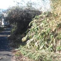 柿の園地に竹が倒れ