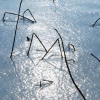 冬の福島潟