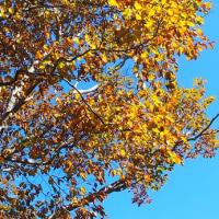 谷川岳の紅葉を見てきました
