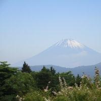 箱根旅行 8 ☆ホテルグリーンプラザ箱根 庭