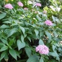 宮崎県市の青島には熱帯植物園が有ります。大温室でゆったりと2時間くらい過ごしてしまいました その2