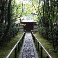 「高桐院」/(京都2016初秋)