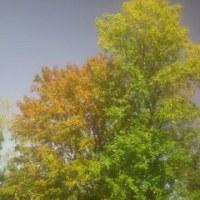 秋晴れ、内科グランドラウンド